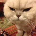 【悲報】猫さんが病院でがっつり拘束された様子が「トムとジェリー」Twitterで同情され話題に
