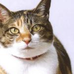 【にゃんぱく宣言】ACジャパンのCMの「猫」と「関白宣言」の掛け合わせが可愛すぎるとtwitterで話題に